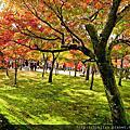 京都獵紅葉
