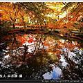日本2012年紅葉最前線「預測圖」