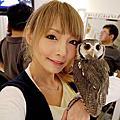 東京Day.2-貓頭鷹咖啡廳