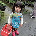 2015/01/18大湖草莓
