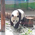 春季旅遊~木柵動物園
