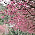 2013.春遊三星