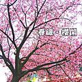 2009.3.11春。蹺班。賞櫻去