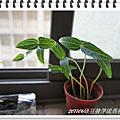 201106綠豆發芽成長初體驗