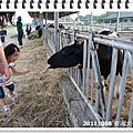 20111008東海大學牧場