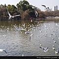 2006冬 滇之旅-昆明