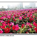 凹仔底花海20101217
