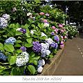 2009 06 紫楊花