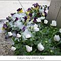 2010 04 四月雪