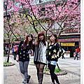 20120217 烏來勇士廣場櫻花行