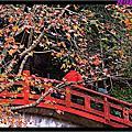 2013拱北殿楓紅