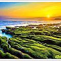 2017老梅綠藻