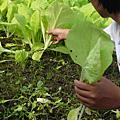 大二蔬菜實習課