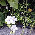 花草即景 活力旺盛