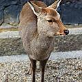 2015/02/01 日本可愛動物拜訪之旅 Day 3