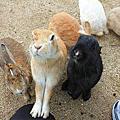 2015/02/02 日本可愛動物之旅 Day 4