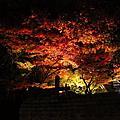 京都寧寧之道夜遊
