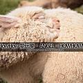 20120805 神獸草泥馬 in 天馬牧場