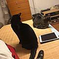 貓言貓語的貓事