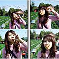 2007.01.28採莓記