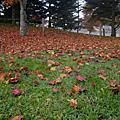 日本東京+輕井澤的秋天