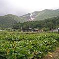 201006 角板山&陽明山