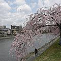 2012.04.04 日本關西賞櫻行 Day5