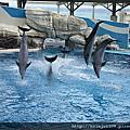 20101225冬日小旅行--花蓮海洋公園