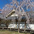 2011.04.04_涉成園。醍醐寺
