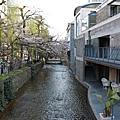 2011.04.03_府立植物園。高瀨川