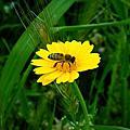 09春天的Syggrou公園