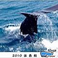 2010抹香鯨再現鯨奇