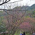 20150207太極嶺賞櫻