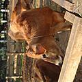 20091206味全埔心農場