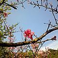 2010春季陽明山賞花