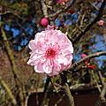 20140822 auburn japanese garden