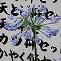 20070708京都大阪遊