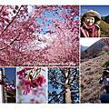 20110226武陵農場櫻花雨