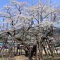 200903日本自由行
