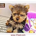 2013年 8月新生幼犬
