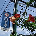 9月日本行之中野-吉祥寺-新宿