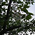 2009-05-31 北海道蜜月
