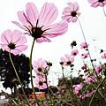 0404。路邊的那些花兒