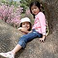 2004年陽明山櫻花與不是媽的兩個姐姐