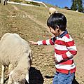 20161213清境看羊去
