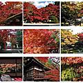2011京都賞楓