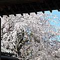 京都-醍醐寺寶靈館
