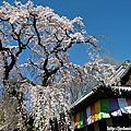 京都-醍醐寺三寶院