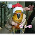 聖誕鳥party