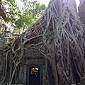 吳哥窟之塔普倫寺